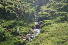 Arbe-guna